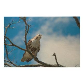 """Hawk On The Hunt 36""""x24"""" Wood Wall Art"""