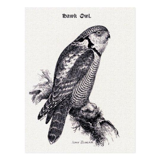 Hawk Owl Vintage Bird Illustration Postcard