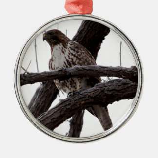Hawk Perched in Tree Silver-Colored Round Decoration