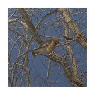 Hawk, Wood Photo Print. Wood Wall Art