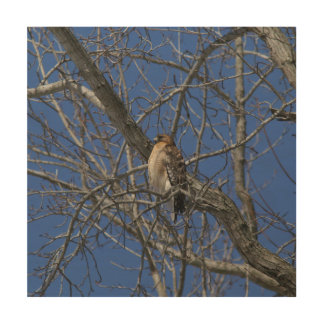 Hawk, Wood Photo Print. Wood Wall Decor