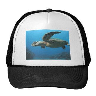 Hawks Bill Turtle Hats
