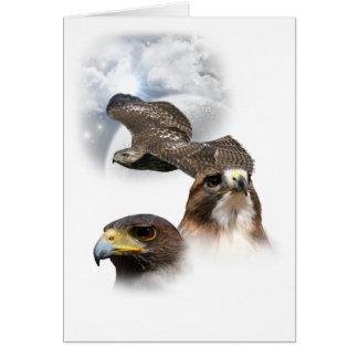Hawks Card