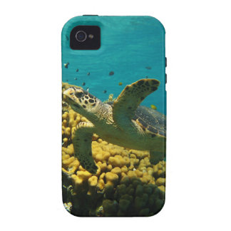 Hawksbill Sea Turtle iPhone 4/4S Cases