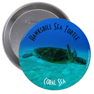Hawksbill Sea Turtle Great Barrier Reef Coral Sea 10 Cm Round Badge