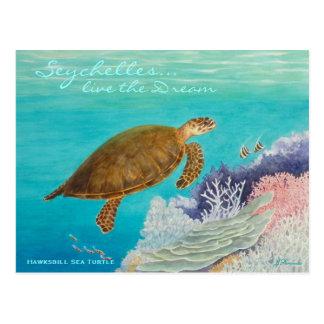 Hawksbill Sea Turtle Post Card