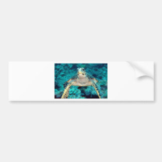 Hawksbill Turtle Bumper Stickers