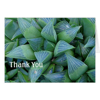 Haworthia Succulent Plants Thank You Card