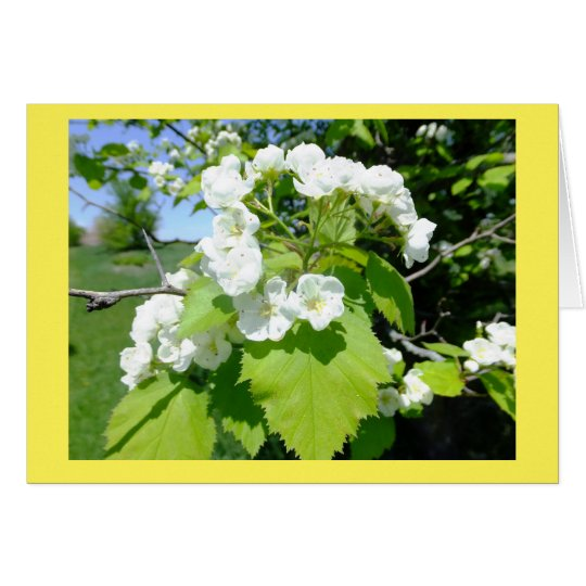 Hawthorn Flowers Blank Note Card