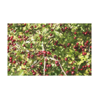 Hawthorn Photo A Canvas Print