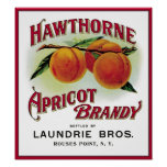 Hawthorne Apricot Brandy Posters
