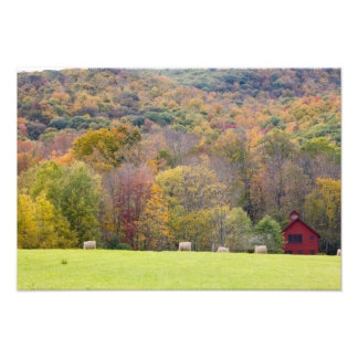 Hay bales and fall foliage, on a farm in photographic print