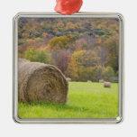 Hay bales and fall foliage on farm,