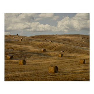 Hay bales and rolling landscape, Tuscany, Italy Poster