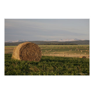 Hay Bales In A Field With Mountains At Sunrise Poster