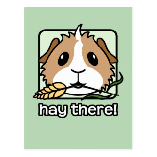 Hay There! (Guinea Pig) Postcard