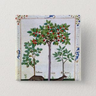 Hazelnut Bush  and Cherry tree 15 Cm Square Badge