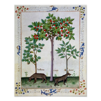 Hazelnut Bush  and Cherry tree Poster