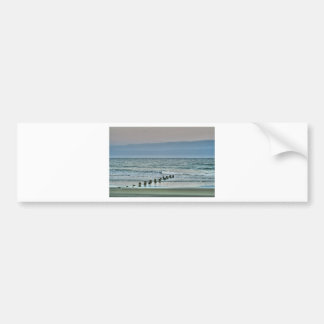 HDR Ocean Beach Seagul Car Bumper Sticker