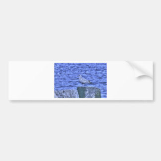 HDR Seagull Sitting on Pier Pylon Bumper Stickers