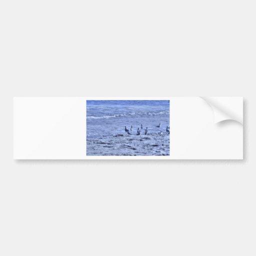 HDR Seagulls Together Beach Watching Ocean Bumper Sticker