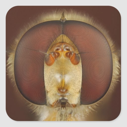 Head and Compound Eyes of a Hover Fly Sticker