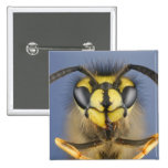 Head of a Common Wasp 15 Cm Square Badge