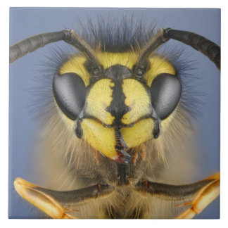 Head of a Common Wasp Tile