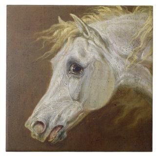 Head of a Grey Arabian Horse (oil on canvas on pan Tile