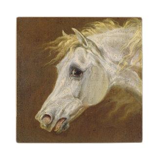 Head of a Grey Arabian Horse (oil on canvas on pan Wood Coaster