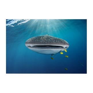 Head of a Whale Shark Acrylic Wall Art