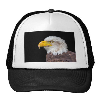 Head of bald eagle on black cap