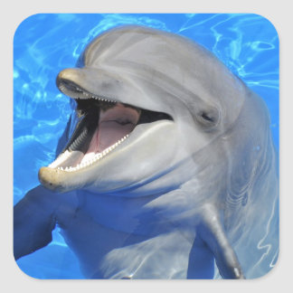 Head of  bottlenose dolphin square sticker