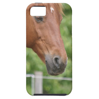 Head of brown horse iPhone 5 case