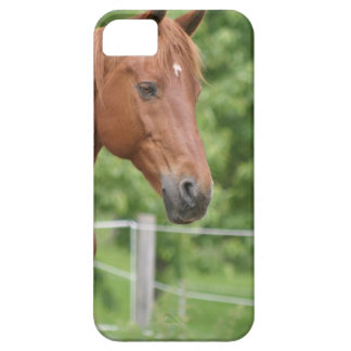 Head of brown horse iPhone 5/5S covers