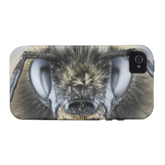 Head of bumblebee iPhone 4 cover