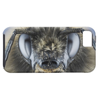 Head of bumblebee iPhone 5 covers