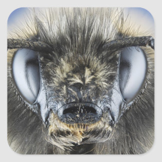 Head of bumblebee square sticker