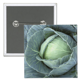 Head of cabbage with drops of water 15 cm square badge