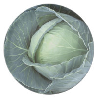 Head of cabbage with drops of water on it,
