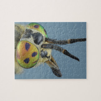 Head of deer fly puzzles