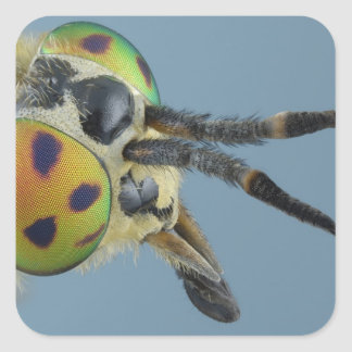 Head of deer fly square sticker