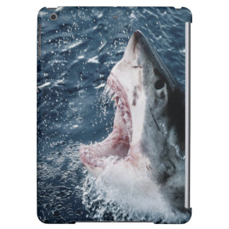 Head of Great White Shark