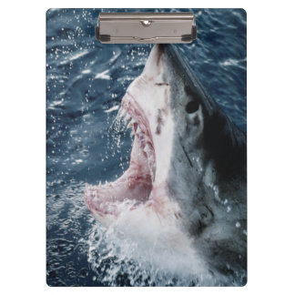 Head of Great White Shark Clipboard