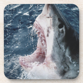Head of Great White Shark Coaster