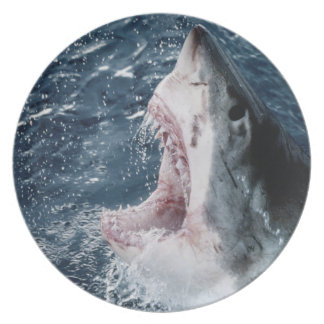 Head of Great White Shark Plate