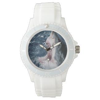 Head of Great White Shark Watch