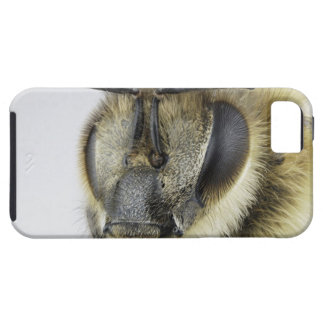 Head of honeybee case for the iPhone 5