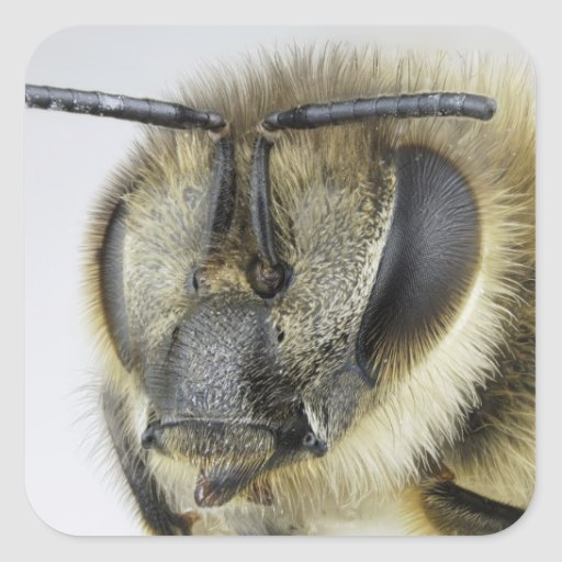 Head of honeybee square stickers