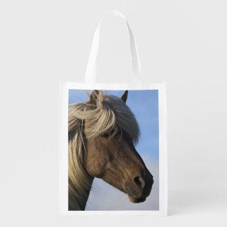Head of Icelandic horse, Iceland